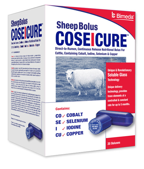coseicure-sheep